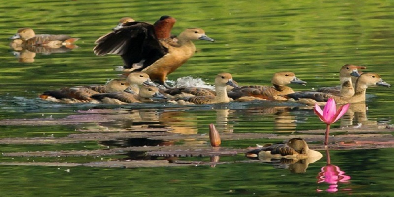 এবার শীতে চাঁপাইয়ে অতিথি পাখির দেখা নেই